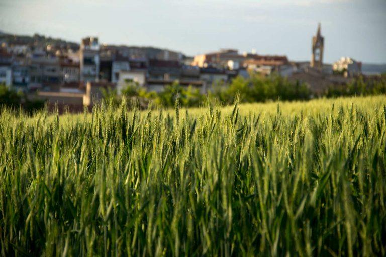 blat la soledat igualada